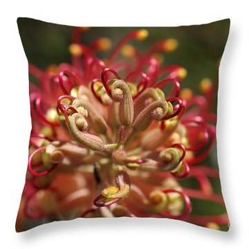 Grevillea Superb Australian Flora Throw Pillow