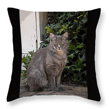 Throw Pillow featuring the photograph Grey Cat by Donald Williams