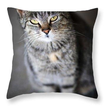 Grey Cat Portrait Throw Pillow by Elena Elisseeva