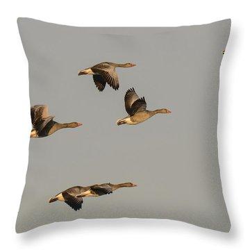 Grey Geese Throw Pillow by Michael Mogensen