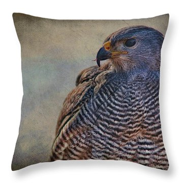 Throw Pillow featuring the photograph Grey Hawk by Barbara Manis