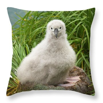 Grey-headed Albatross Chick Throw Pillow by Yva Momatiuk John Eastcott