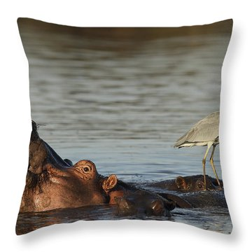 Grey Heron On Hippopotamus Kruger Np Throw Pillow by Perry de Graaf