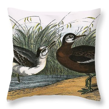 Grey Phalarope Throw Pillow