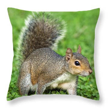 Throw Pillow featuring the photograph Grey Squirrel by Antonio Scarpi