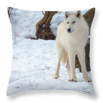 Grey Wolf Throw Pillow by Everet Regal