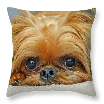 Throw Pillow featuring the photograph Griff by Lisa Phillips