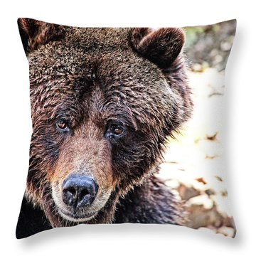 Grizz Throw Pillow by Karol Livote