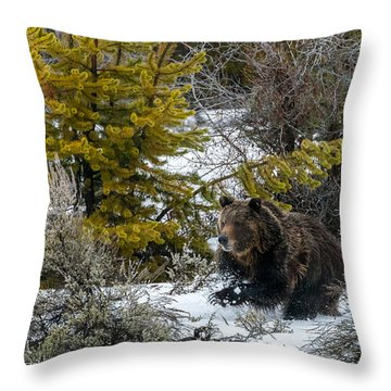Throw Pillow featuring the photograph Grizzly #760 Chasing A Moose by Yeates Photography