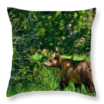 Grizzly Bear 760 Throw Pillow by Greg Norrell