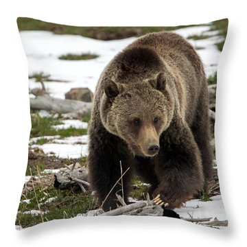 Throw Pillow featuring the photograph Grizzly Bear In Spring by Jack Bell