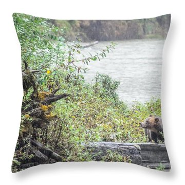 Grizzly Bear Late September 2 Throw Pillow