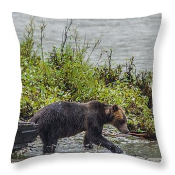Grizzly Bear Late September 4 Throw Pillow