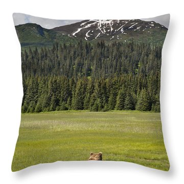 Grizzly Bear Mother And Cubs In Meadow Throw Pillow