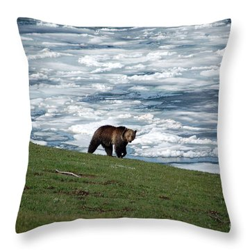 Throw Pillow featuring the photograph Grizzly Bear On Frozen Lake Yellowstone by Shawn O'Brien