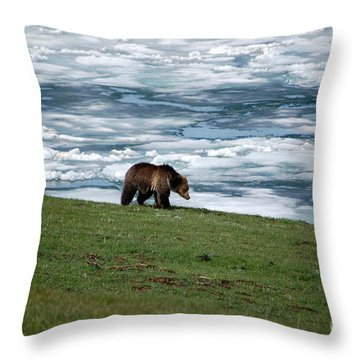 Throw Pillow featuring the photograph Grizzly Bear On The Shoreline Of Frozen Lake Yellowstone by Shawn O'Brien
