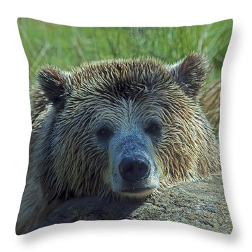 Grizzly Bear Resting Throw Pillow by Garry Gay