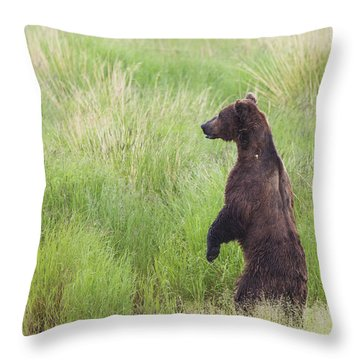 Grizzly Bear Ursus Arctos Standing Throw Pillow by Lucas Payne