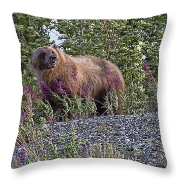 Grizzly Throw Pillow by David Gleeson