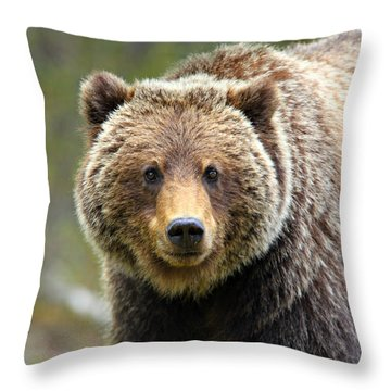 Grizzly Throw Pillow by Stephen Stookey