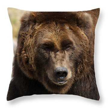 Grizzly Throw Pillow by Steve McKinzie