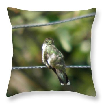 Throw Pillow featuring the photograph Grooming Hummer by Nick Kirby