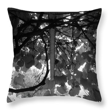 Throw Pillow featuring the photograph Gropius Vine - Black And White by Joseph Skompski