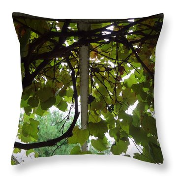 Throw Pillow featuring the photograph Gropius Vine by Joseph Skompski
