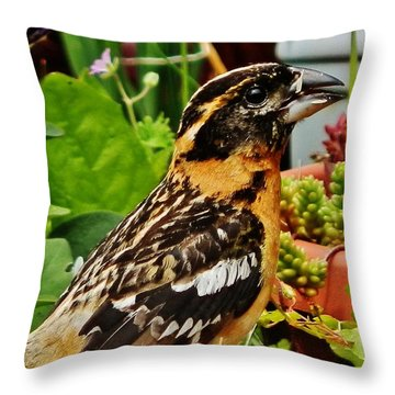 Throw Pillow featuring the photograph Grosbeak Profile by VLee Watson