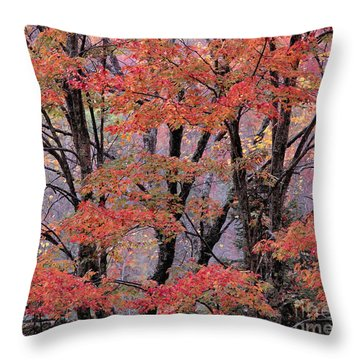 Groton Forest Maples Throw Pillow by Alan L Graham