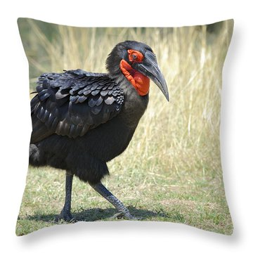 Ground Hornbill Throw Pillow