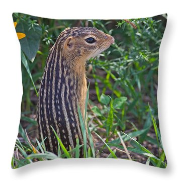 Ground Squirrel At Horicon Marsh Throw Pillow