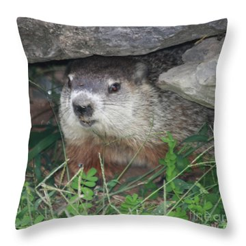 Groundhog Hiding In His Cave Throw Pillow