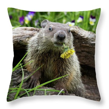 Groundhog  Kit Marmota Monax Throw Pillow