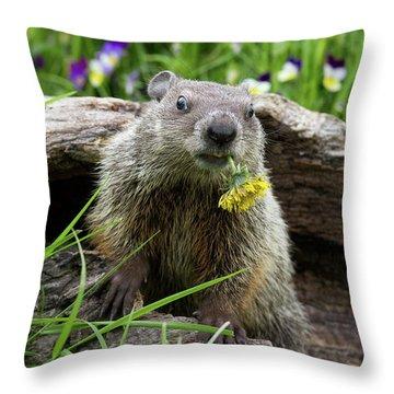 Groundhog  Kit Marmota Monax Throw Pillow by Debbie Dicarlo