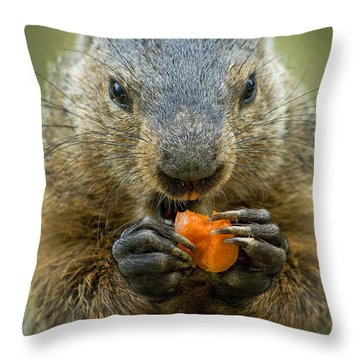 Groundhogs Favorite Snack Throw Pillow by Paul W Faust -  Impressions of Light