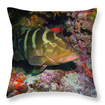 Grouper Throw Pillow by Carey Chen