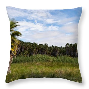 Grove Of Mexican Fan Palm Washingtonia Throw Pillow