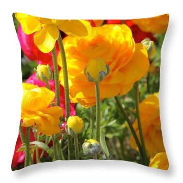 Growth Of A Ranunculus Throw Pillow by Suzanne Oesterling