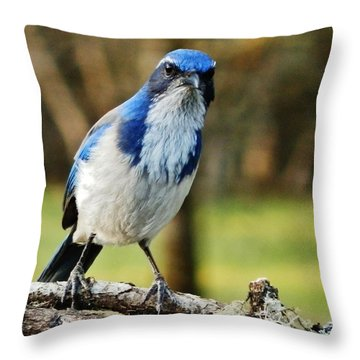 Grumpy Jay Throw Pillow by VLee Watson