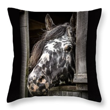 Guard Horse-what's The Password? Throw Pillow