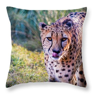 Guess Whose Hungry Throw Pillow by Tim Stanley
