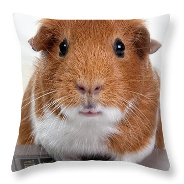 Guinea Pig Talent Throw Pillow