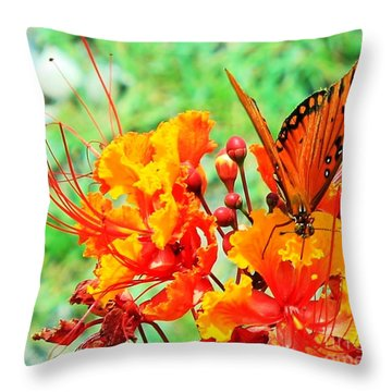 Gulf Fritillary Butterfly On Pride Of Barbados Throw Pillow
