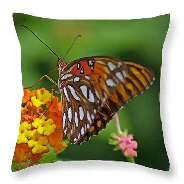 Gulf Fritillary IIi Throw Pillow