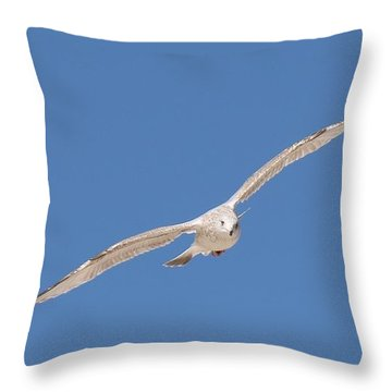 Gull In Flight - 2 Throw Pillow