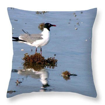 Throw Pillow featuring the photograph Gull In Seaweed by Linda Cox