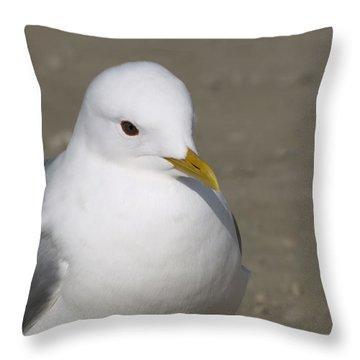 Gull Throw Pillow by Tara Lynn