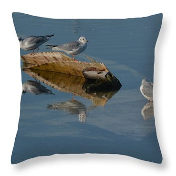 Gulls On A Sunken Boat Throw Pillow by Dan Williams