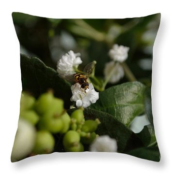 Gypsophilia Hover Fly Throw Pillow